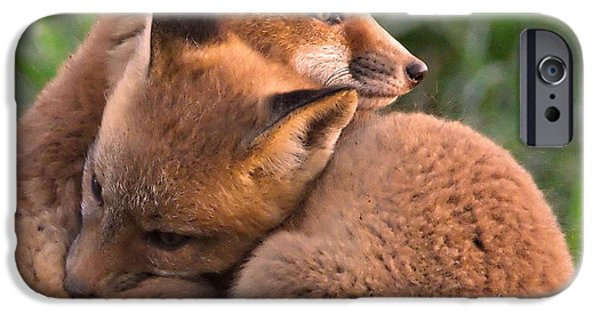 Fox Kit iPhone Cases - Fox Cubs Cuddle iPhone Case by William Jobes