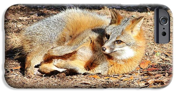 Dogs iPhone Cases - Fox Enjoying The Day iPhone Case by Cynthia Guinn
