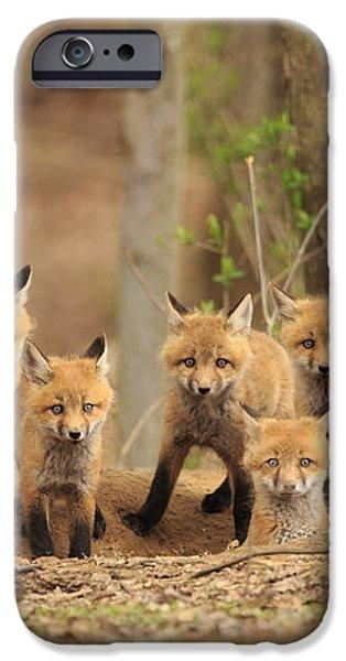 Fox Family Portrait iPhone Case by Everet Regal