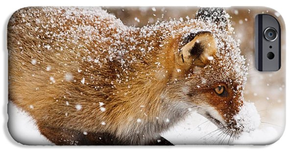 Storm iPhone Cases - Fox First Snow iPhone Case by Roeselien Raimond