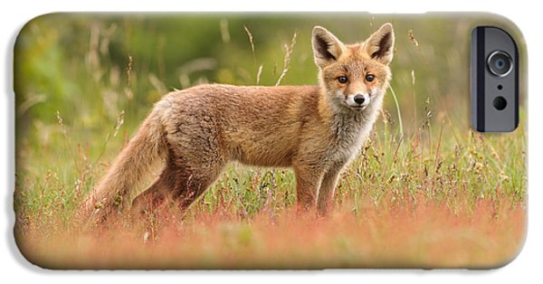 Juveniles iPhone Cases - Fox Kit in a Field of Sorrel iPhone Case by Roeselien Raimond