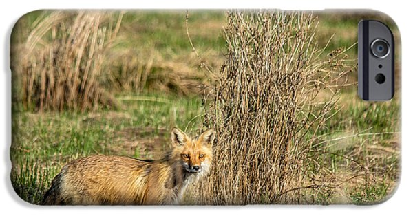 Dog In Landscape iPhone Cases - Fox Landscape iPhone Case by Cheryl Baxter