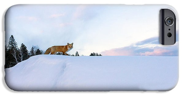 Red Fox iPhone Cases - Fox of the North III iPhone Case by Mary Amerman