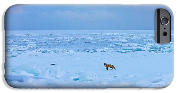 Duluth iPhone Cases - Fox of the North Country IV iPhone Case by Mary Amerman