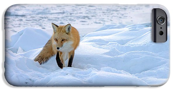Duluth iPhone Cases - Fox of the North II iPhone Case by Mary Amerman