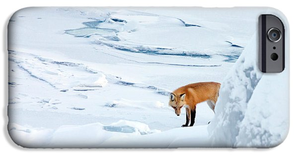 Duluth iPhone Cases - Fox of the North V iPhone Case by Mary Amerman