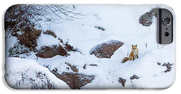 Little iPhone Cases - Fox of the North VI iPhone Case by Mary Amerman