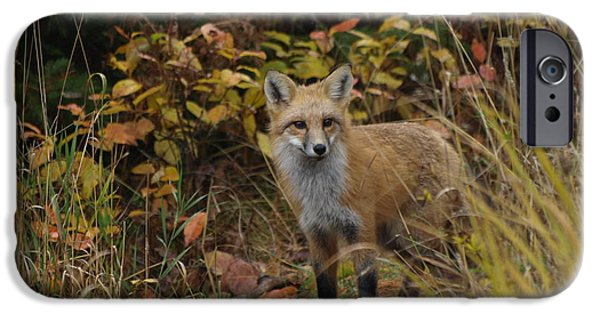 Dog Close-up iPhone Cases - Fox Profile iPhone Case by James Peterson