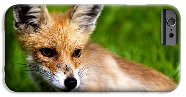 Young Photographs iPhone Cases - Fox pup iPhone Case by Fabrizio Troiani