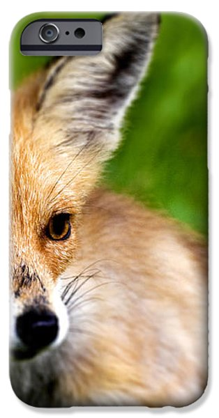 Fox pup iPhone Case by Fabrizio Troiani