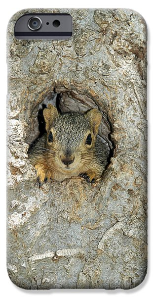 Fox Squirrel iPhone Cases - Fox Squirrel iPhone Case by Gregory G. Dimijian