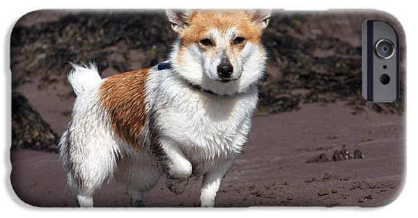 Dog In Landscape iPhone Cases - Parson Russell Terrier At The Beach iPhone Case by Aidan Moran