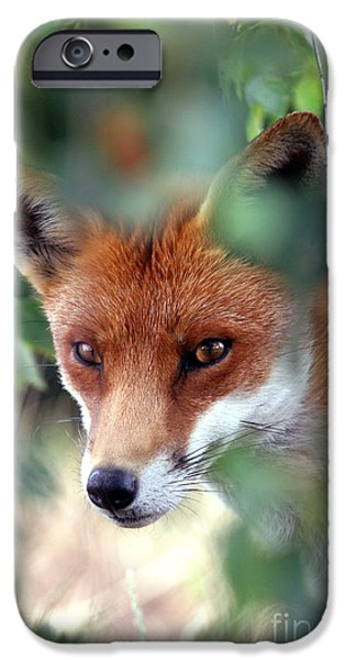 Red Fox iPhone Cases - Fox through trees iPhone Case by Tim Gainey