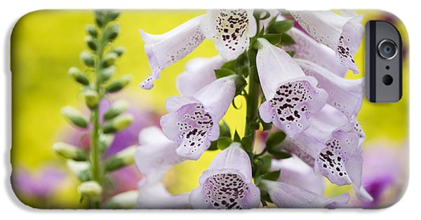 Poison iPhone Cases - Foxgloves iPhone Case by Tim Gainey