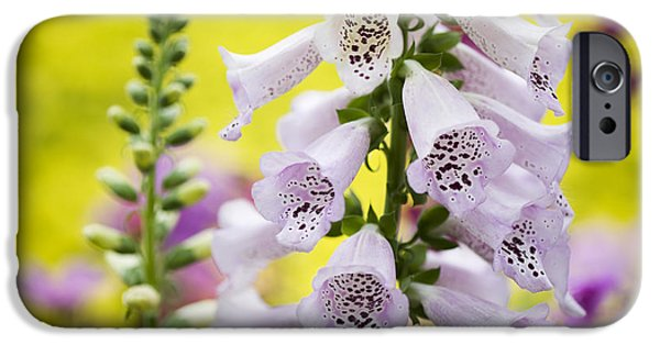Foxglove Flowers Photographs iPhone Cases - Foxgloves iPhone Case by Tim Gainey