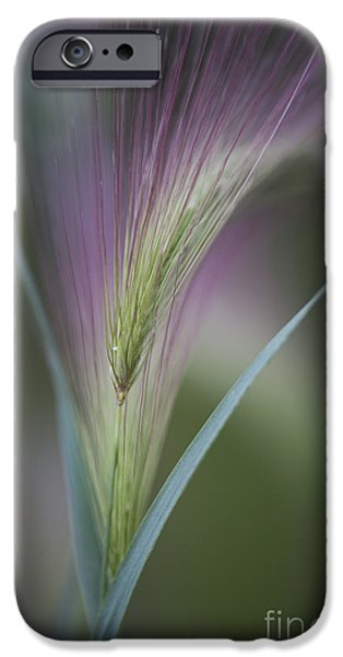 Filigree iPhone Cases - Foxtail Barley iPhone Case by Priska Wettstein
