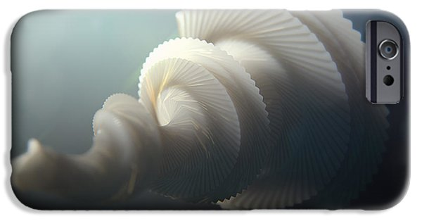 Organic iPhone Cases - Fractal SeaShell  iPhone Case by Pixel  Chimp
