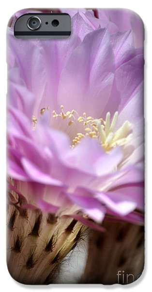 Fragile Beauty iPhone Case by Deb Halloran