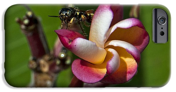 Philodendron iPhone Cases - Frangies visitor iPhone Case by Roy Thoman