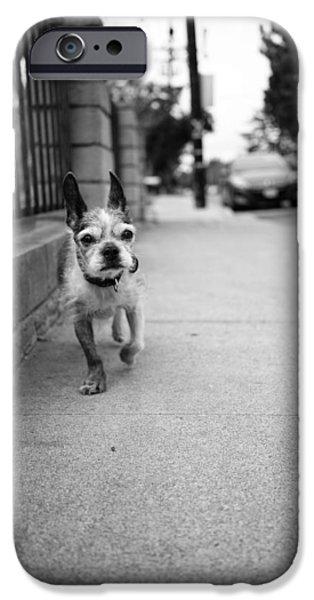 Boston iPhone Cases - Frankie iPhone Case by Shukis Lockwood