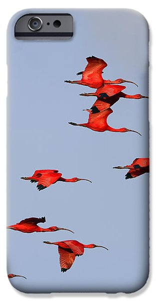 Frankly Scarlet iPhone Case by Tony Beck