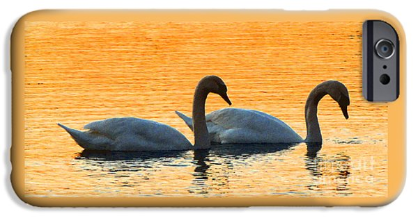 Swans... iPhone Cases - FRED and ETHEL iPhone Case by Gardening Perfection