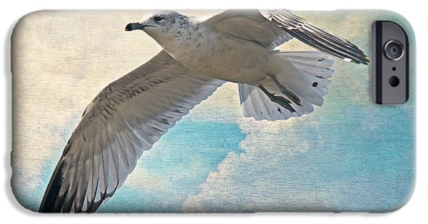 Flying Seagull iPhone Cases - Free As A Bird iPhone Case by HH Photography of Florida