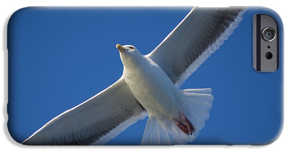 Flying Seagull iPhone Cases - Free On Wings iPhone Case by Agrofilms Photography