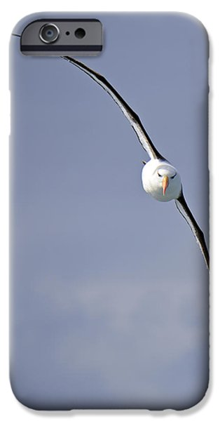 Albatross iPhone Cases - Free To Follow iPhone Case by Tony Beck