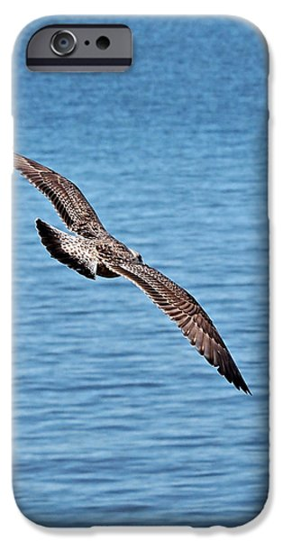 Flying Seagull iPhone Cases - Freedom iPhone Case by Gill Billington