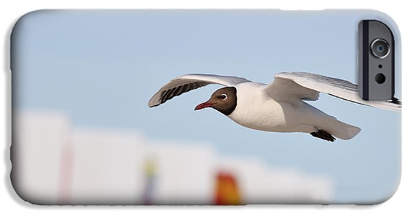 Flying Seagull iPhone Cases - Freedom iPhone Case by Jana Behr