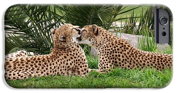 Bonding iPhone Cases - Two Cheetahs Grooming in the Grass iPhone Case by Jessica Foster