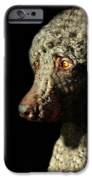 French Poodle Standard iPhone Case by Diana Angstadt
