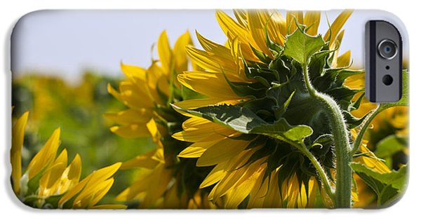 French Open iPhone Cases - French Sunflowers iPhone Case by Nomad Art And  Design