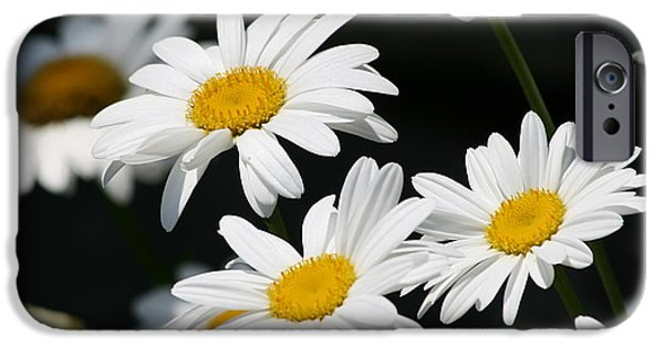 Innocence iPhone Cases - Fresh As iPhone Case by Kim Hojnacki