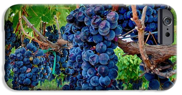 Metal Vineyard Print iPhone Cases - Fresh on the Vine iPhone Case by Kristina Deane