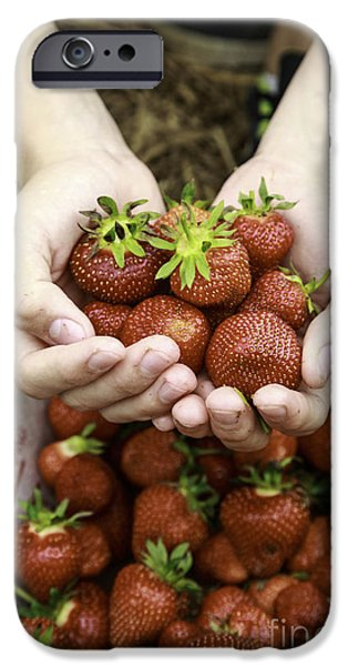 Agricultural iPhone Cases - Fresh picked strawberries iPhone Case by Edward Fielding