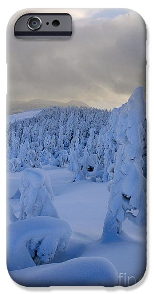 Fresh Snow iPhone Cases - Fresh Snow iPhone Case by Colin Woods
