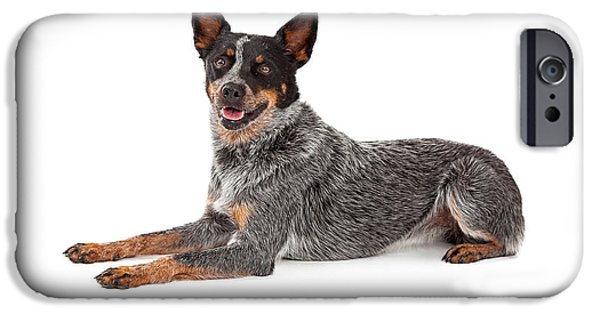 Cattle Dog iPhone Cases - Friendly Australian Cattle Dog Laying iPhone Case by Susan  Schmitz
