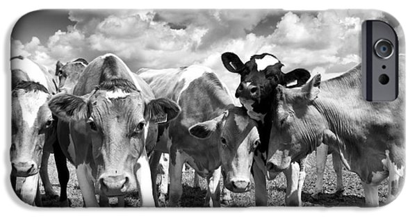 Friendly iPhone Cases - Friendly Cows  iPhone Case by Tim Gainey