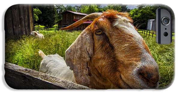 Recently Sold -  - Dog Close-up iPhone Cases - Friendly Goat iPhone Case by Debra and Dave Vanderlaan