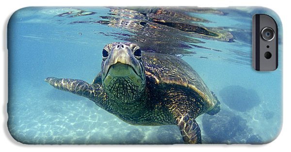 Metal iPhone Cases - friendly Hawaiian sea turtle  iPhone Case by Sean Davey