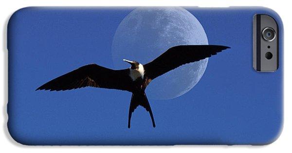 Albatross iPhone Cases - Frigatebird Moon iPhone Case by Jerry McElroy