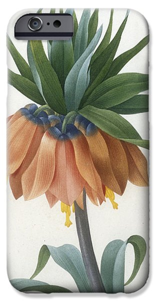 In Bloom Paintings iPhone Cases - Fritillaire Imperiale iPhone Case by Pierre Joseph Redoute