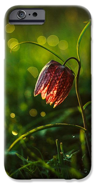 Meleagris iPhone Cases - Fritillaria meleagris iPhone Case by Davorin Mance