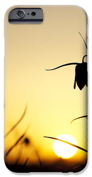 Fritillary Flower Sunset iPhone Case by Tim Gainey
