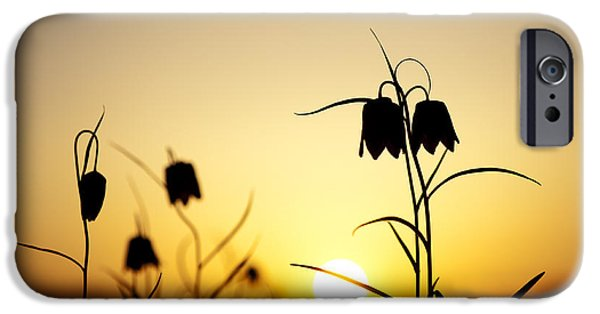 Meleagris iPhone Cases - Fritillary Flower Sunset iPhone Case by Tim Gainey