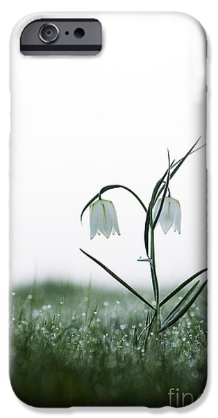 Meleagris iPhone Cases - Fritillary in the Mist iPhone Case by Tim Gainey
