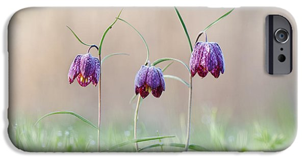 Meleagris iPhone Cases - Fritillary Morning iPhone Case by Tim Gainey