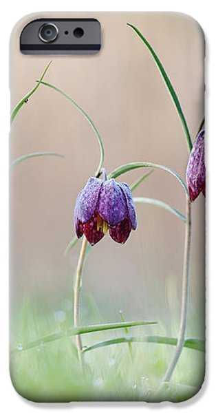 Fritillary Morning iPhone Case by Tim Gainey